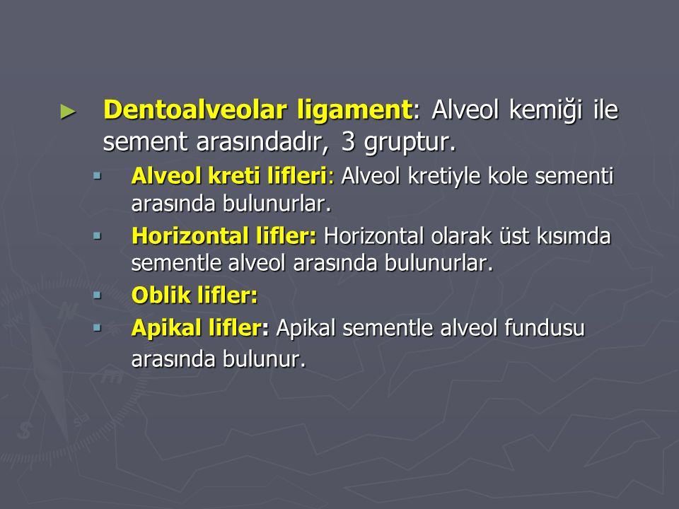 Dentoalveolar ligament: Alveol kemiği ile sement arasındadır, 3 gruptur.