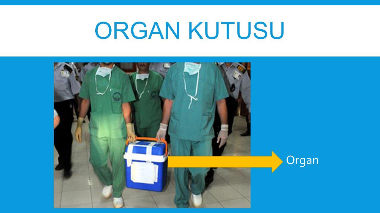Organ kutusu Organ