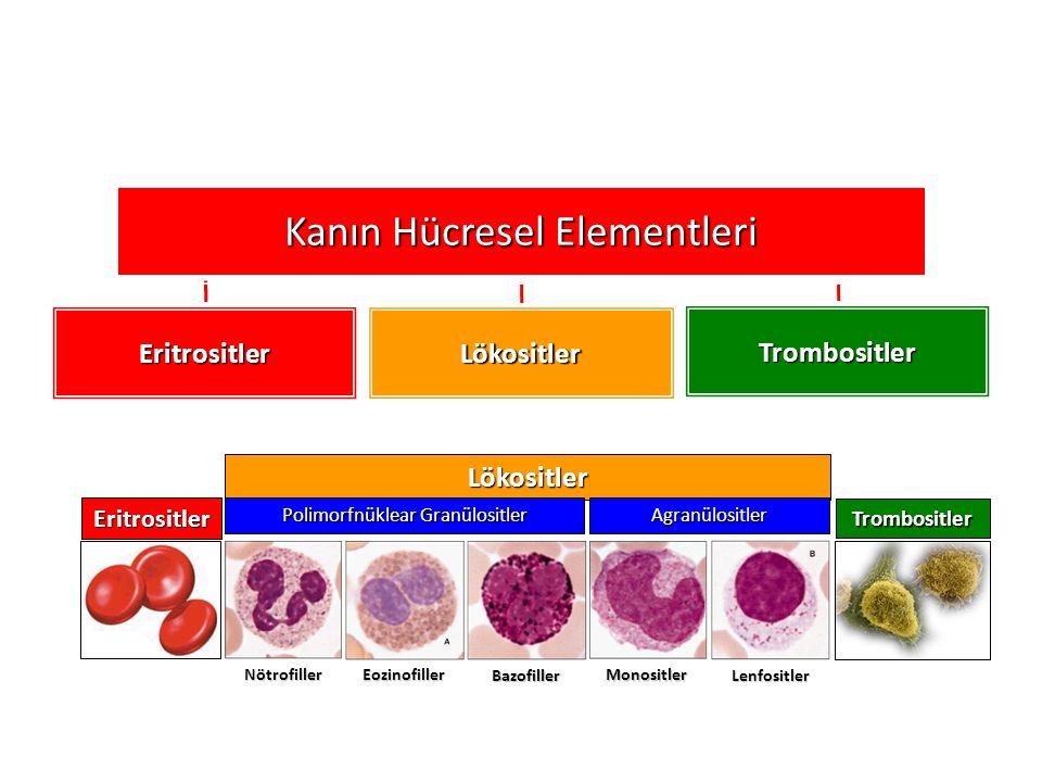 Kanın Hücresel Elementleri