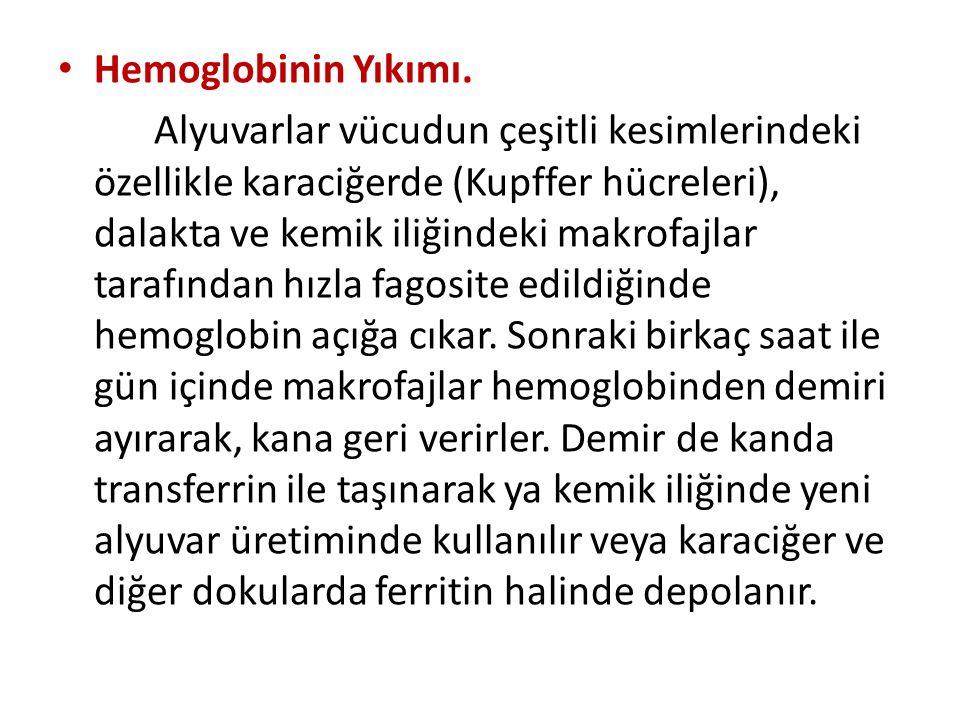 Hemoglobinin Yıkımı.