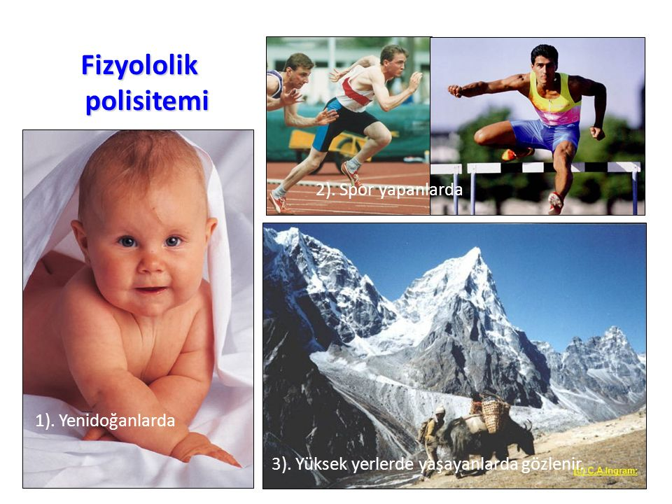 Fizyololik polisitemi