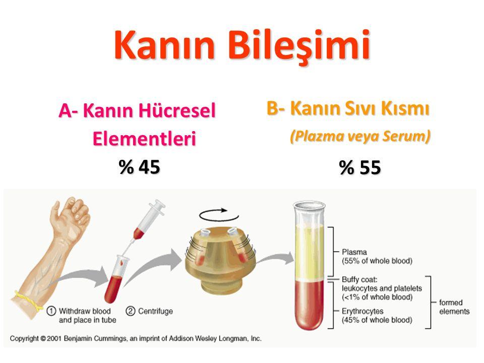 A- Kanın Hücresel Elementleri % 45
