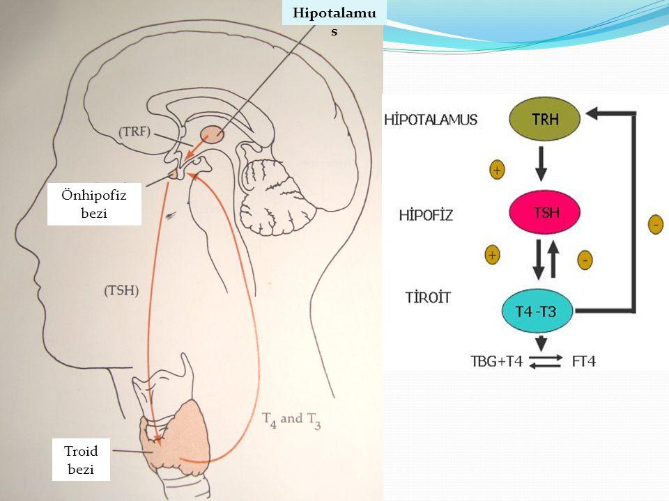 Hipotalamus Önhipofiz bezi Troid bezi