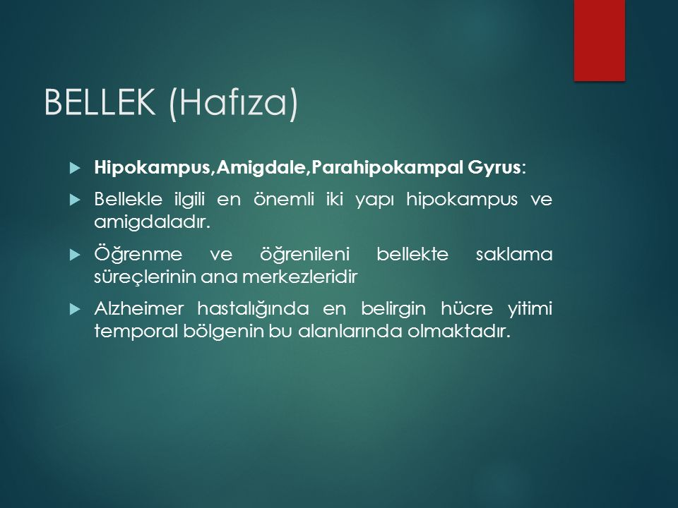 BELLEK (Hafıza) Hipokampus,Amigdale,Parahipokampal Gyrus: