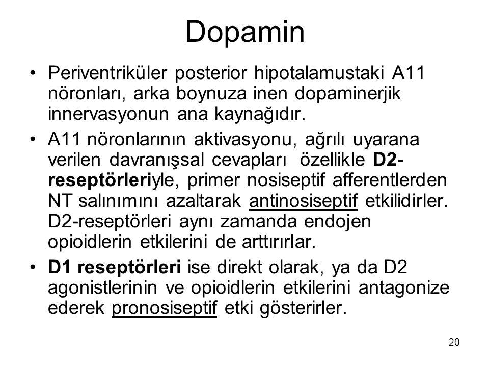 Dopamin Periventriküler posterior hipotalamustaki A11 nöronları, arka boynuza inen dopaminerjik innervasyonun ana kaynağıdır.