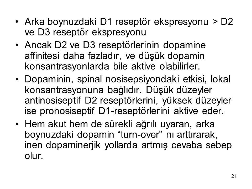 Arka boynuzdaki D1 reseptör ekspresyonu > D2 ve D3 reseptör ekspresyonu