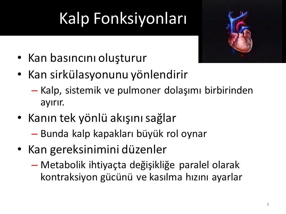 Kalp Fonksiyonları Kan basıncını oluşturur