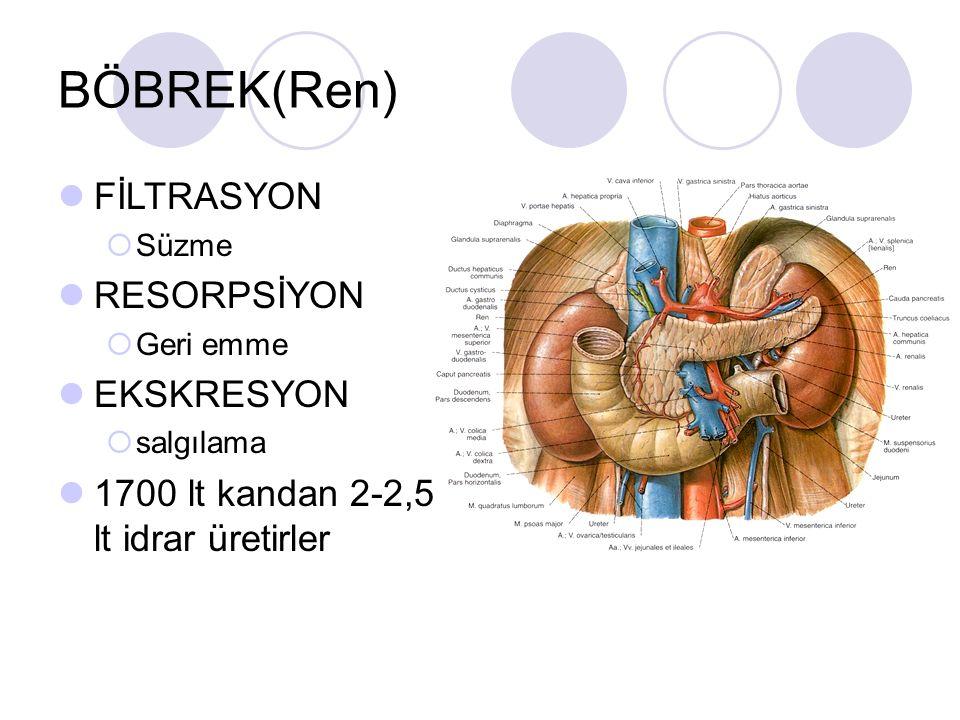 BÖBREK(Ren) FİLTRASYON RESORPSİYON EKSKRESYON
