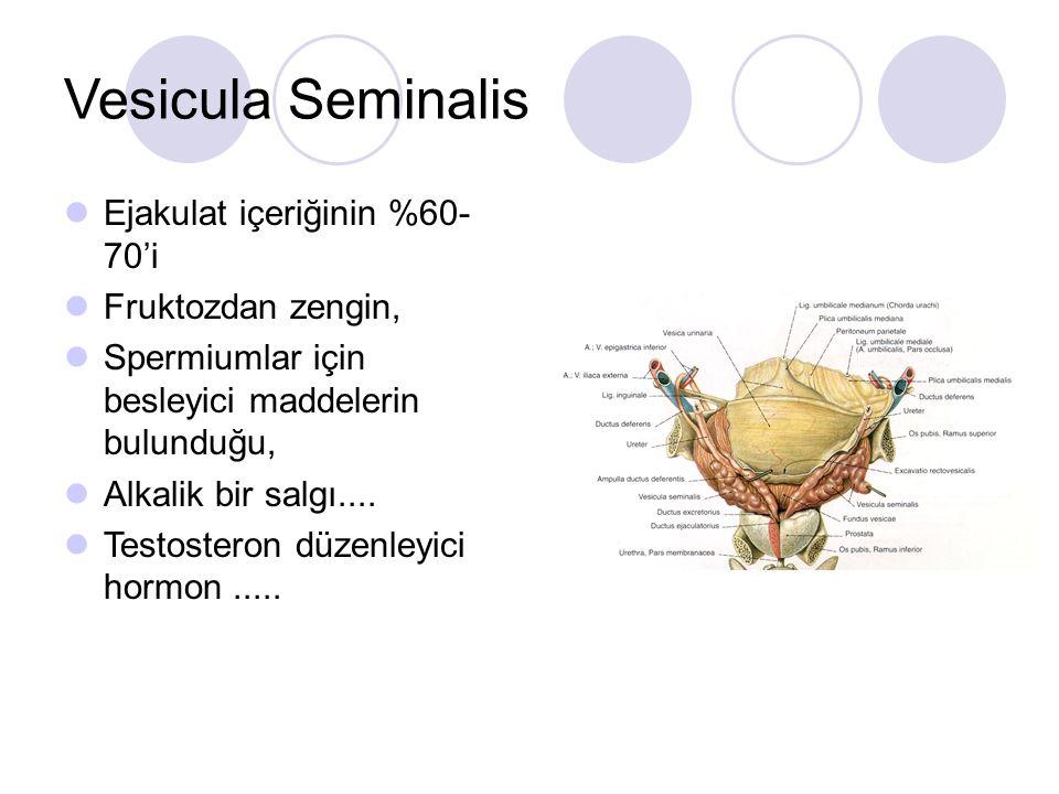 Vesicula Seminalis Ejakulat içeriğinin %60- 70'i Fruktozdan zengin,