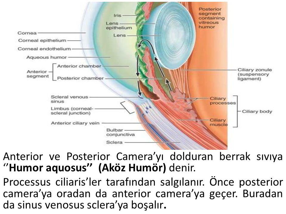 Anterior ve Posterior Camera'yı dolduran berrak sıvıya ''Humor aquosus'' (Aköz Humör) denir.