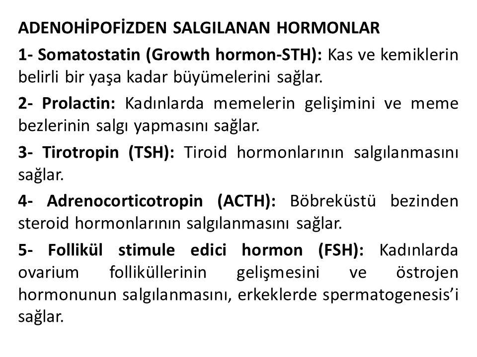 ADENOHİPOFİZDEN SALGILANAN HORMONLAR 1- Somatostatin (Growth hormon-STH): Kas ve kemiklerin belirli bir yaşa kadar büyümelerini sağlar.