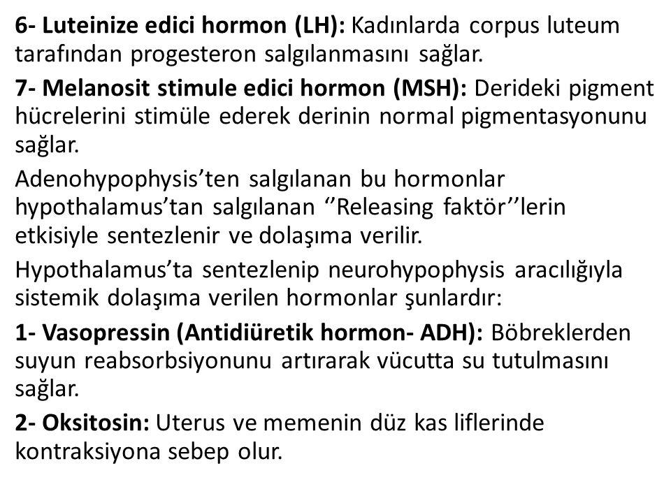 6- Luteinize edici hormon (LH): Kadınlarda corpus luteum tarafından progesteron salgılanmasını sağlar.