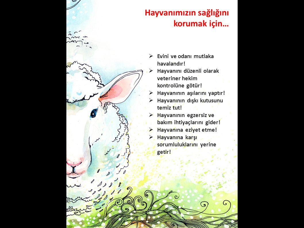 Hayvanımızın sağlığını korumak için…