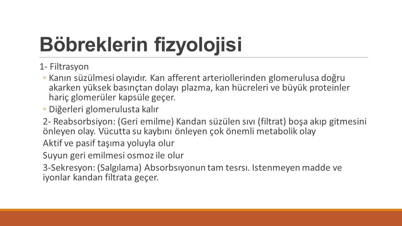 Böbreklerin fizyolojisi