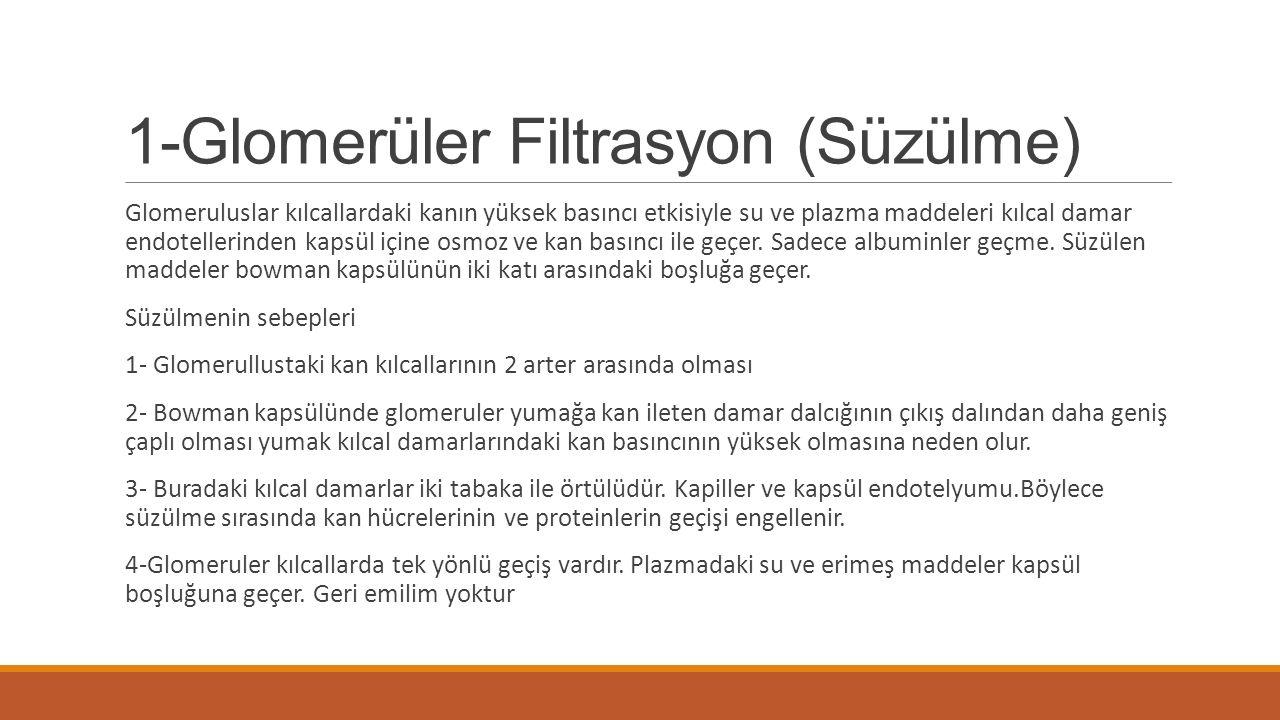 1-Glomerüler Filtrasyon (Süzülme)