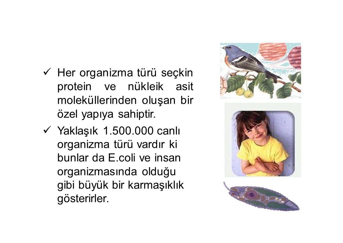 Her organizma türü seçkin protein ve nükleik asit moleküllerinden oluşan bir özel yapıya sahiptir.