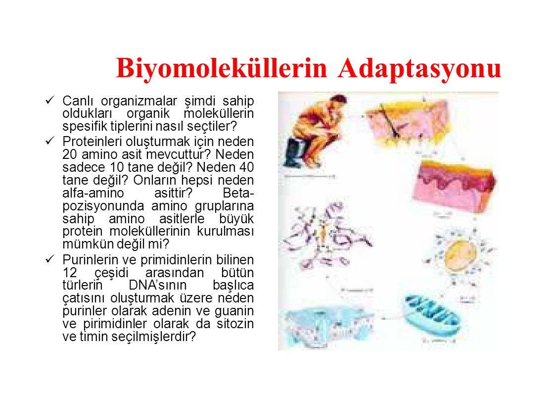 Biyomoleküllerin Adaptasyonu