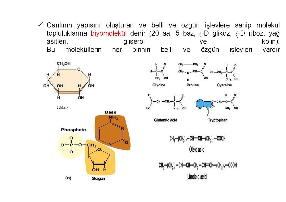 Canlının yapısını oluşturan ve belli ve özgün işlevlere sahip molekül topluluklarına biyomolekül denir (20 aa, 5 baz, -D glikoz, -D riboz, yağ asitleri, gliserol ve kolin). Bu moleküllerin her birinin belli ve özgün işlevleri vardır