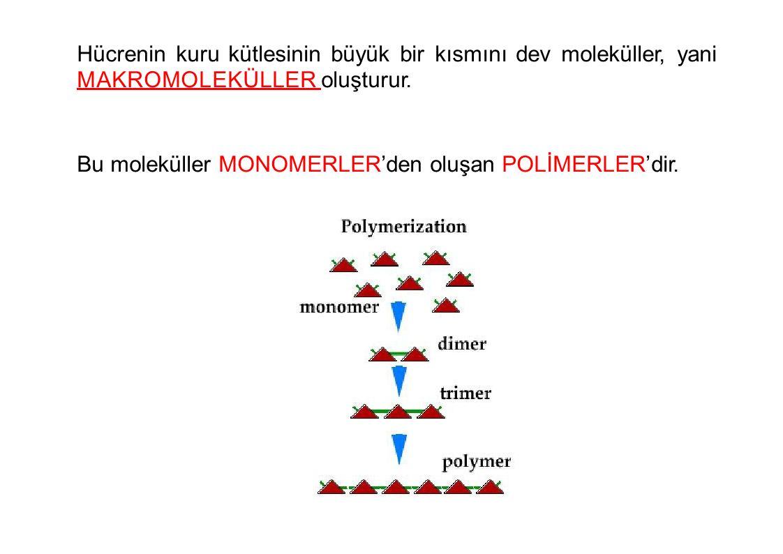 Hücrenin kuru kütlesinin büyük bir kısmını dev moleküller, yani