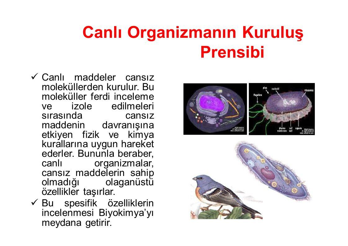 Canlı Organizmanın Kuruluş Prensibi