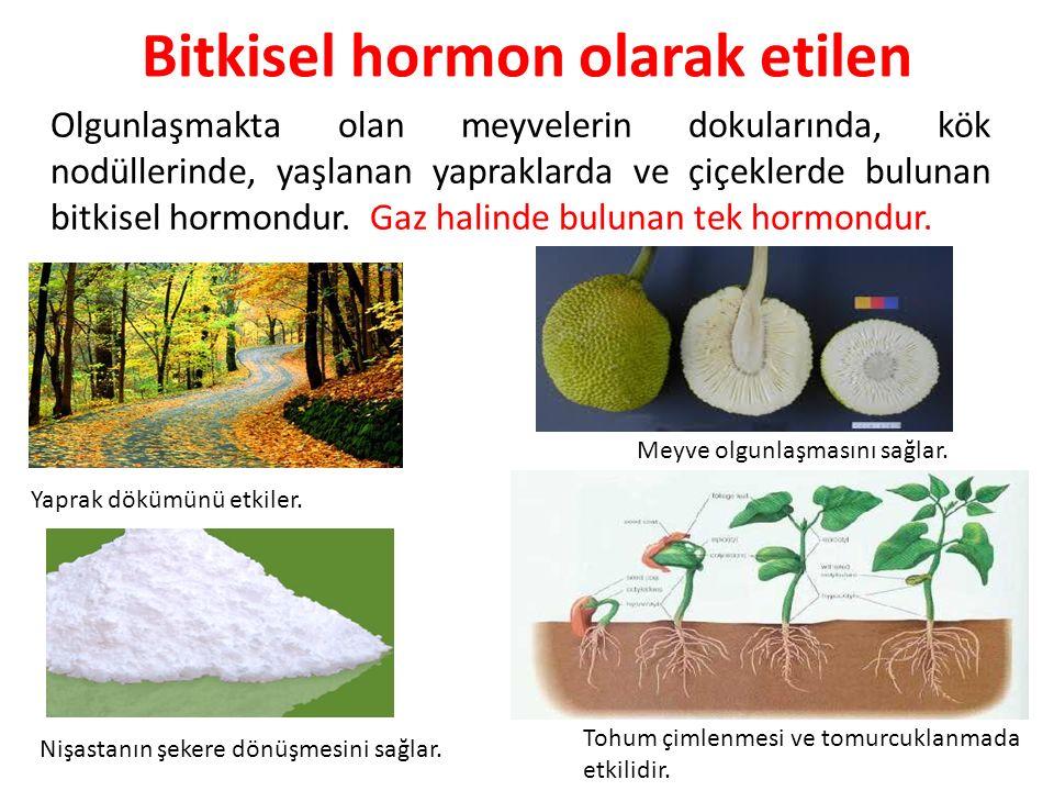 Bitkisel hormon olarak etilen