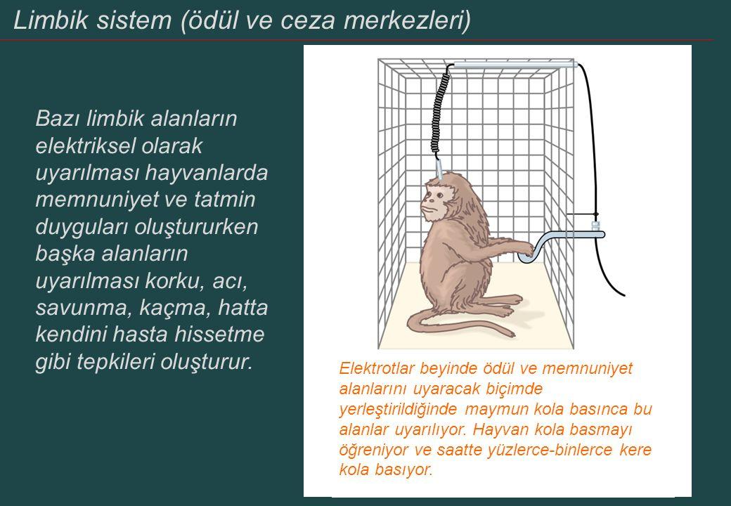 Limbik sistem ve görevleri