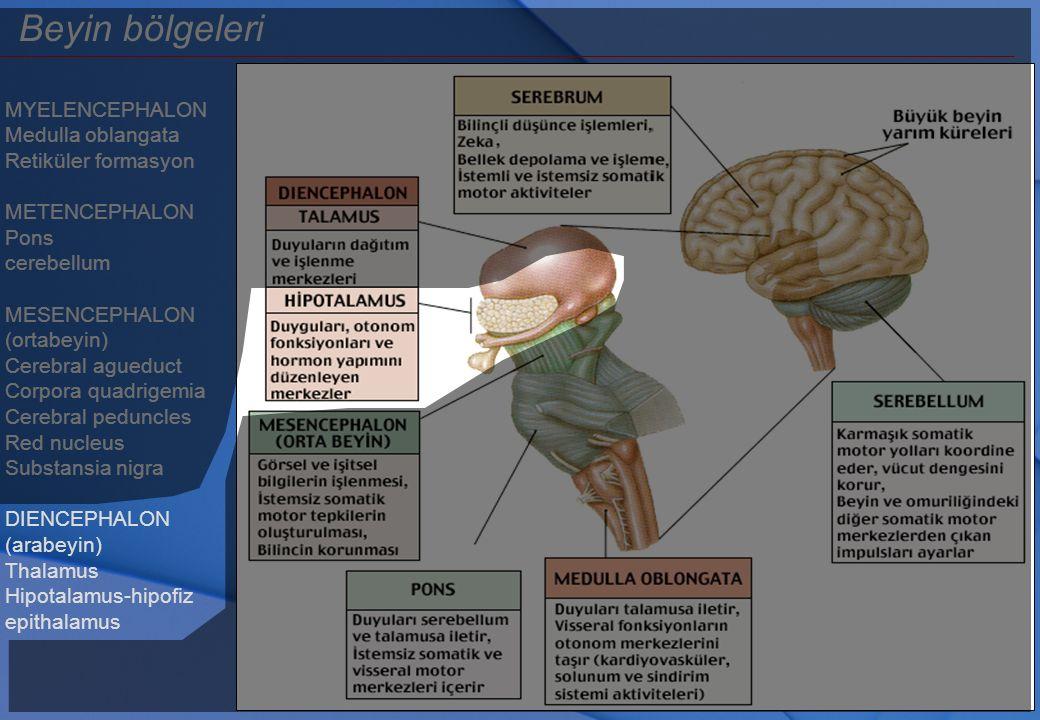 Limbik sistem - Amigdala