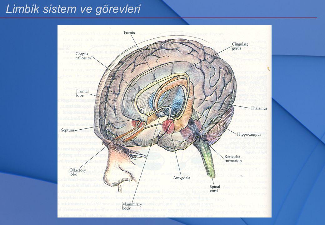 İlkel Beyin