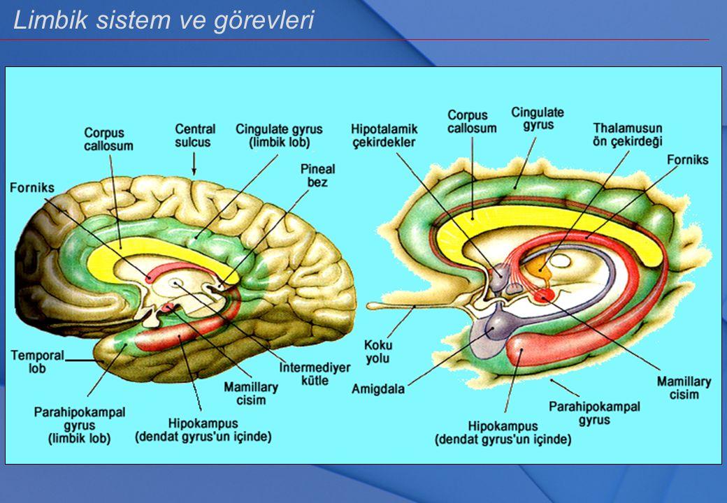 Çok Çok İlkel Beyin