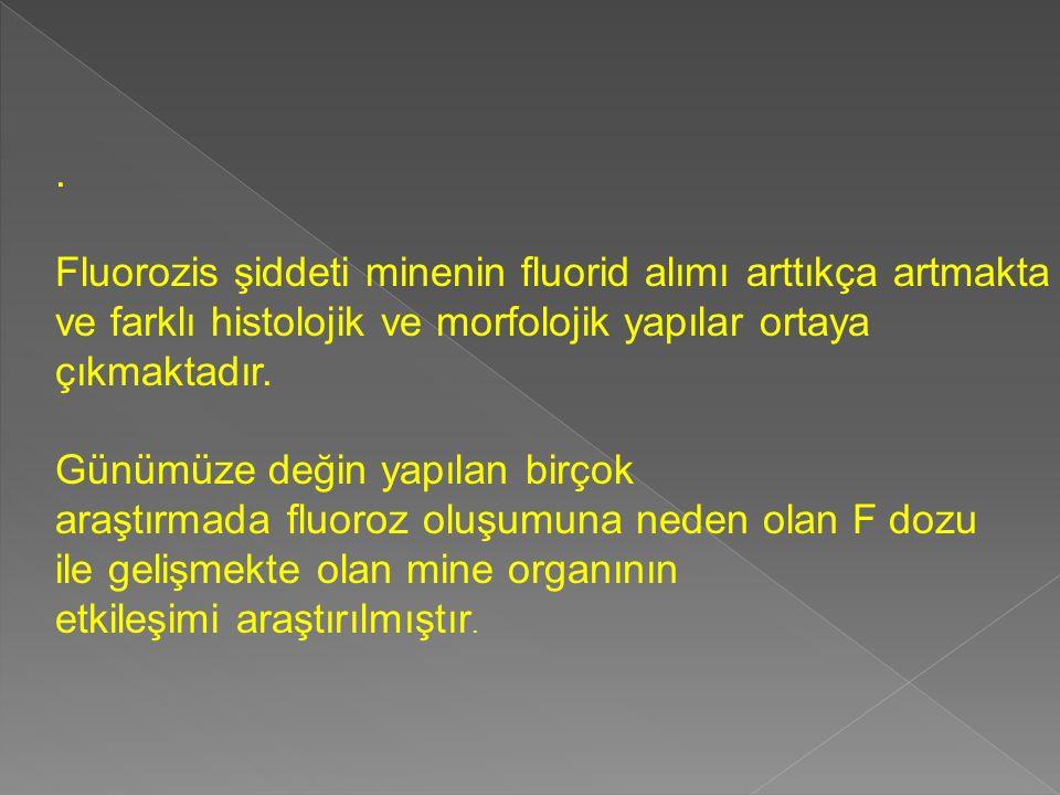 . Fluorozis şiddeti minenin fluorid alımı arttıkça artmakta. ve farklı histolojik ve morfolojik yapılar ortaya.