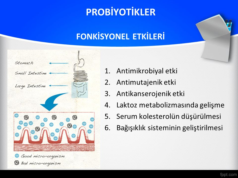 PROBİYOTİKLER FONKİSYONEL ETKİLERİ