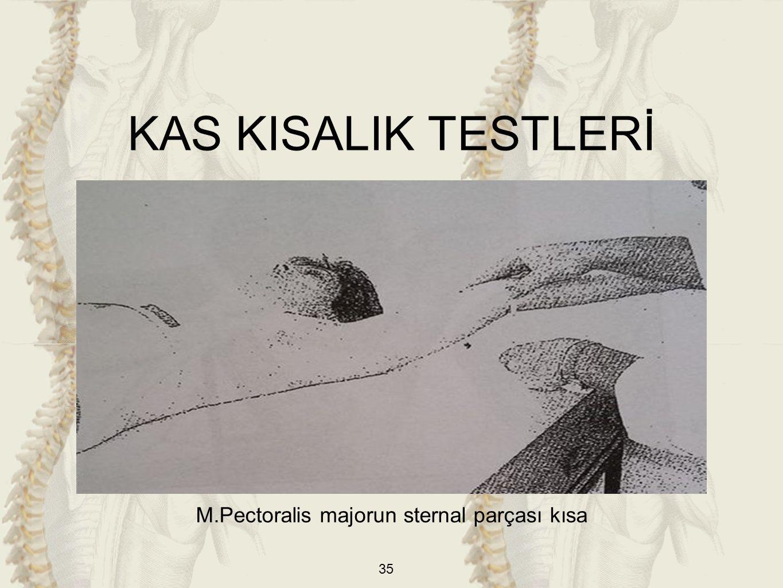M.Pectoralis majorun sternal parçası kısa