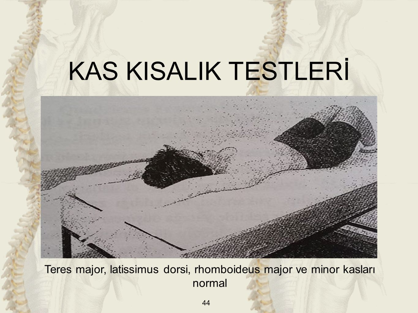 KAS KISALIK TESTLERİ Teres major, latissimus dorsi, rhomboideus major ve minor kasları normal