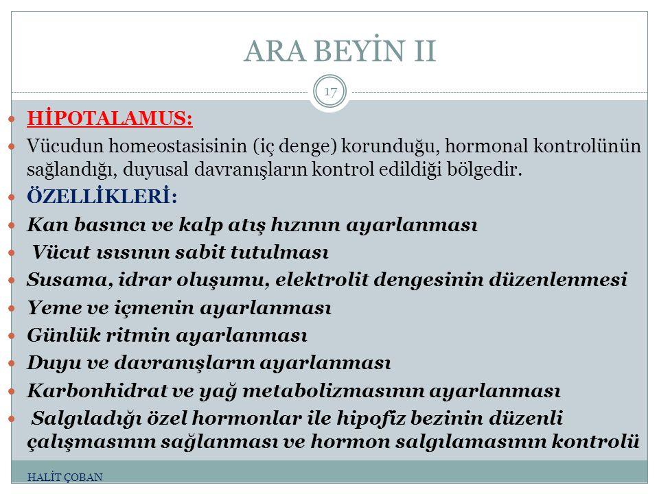 ARA BEYİN II HİPOTALAMUS: