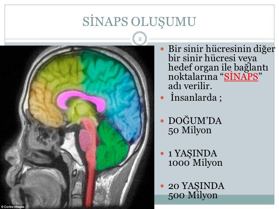 SİNAPS OLUŞUMU Bir sinir hücresinin diğer bir sinir hücresi veya hedef organ ile bağlantı noktalarına SİNAPS adı verilir.