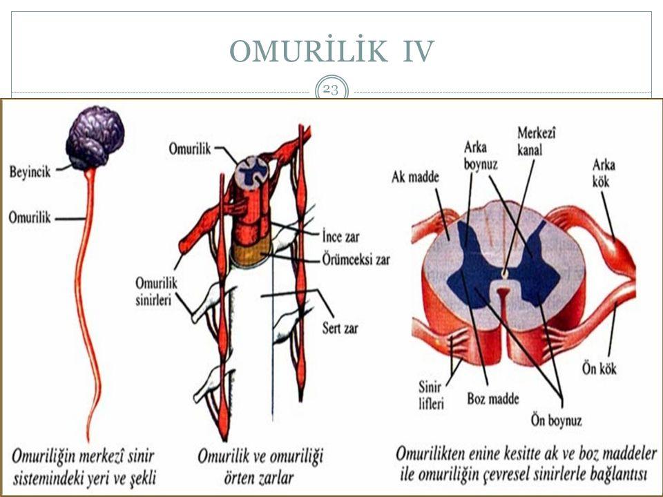 OMURİLİK IV HALİT ÇOBAN