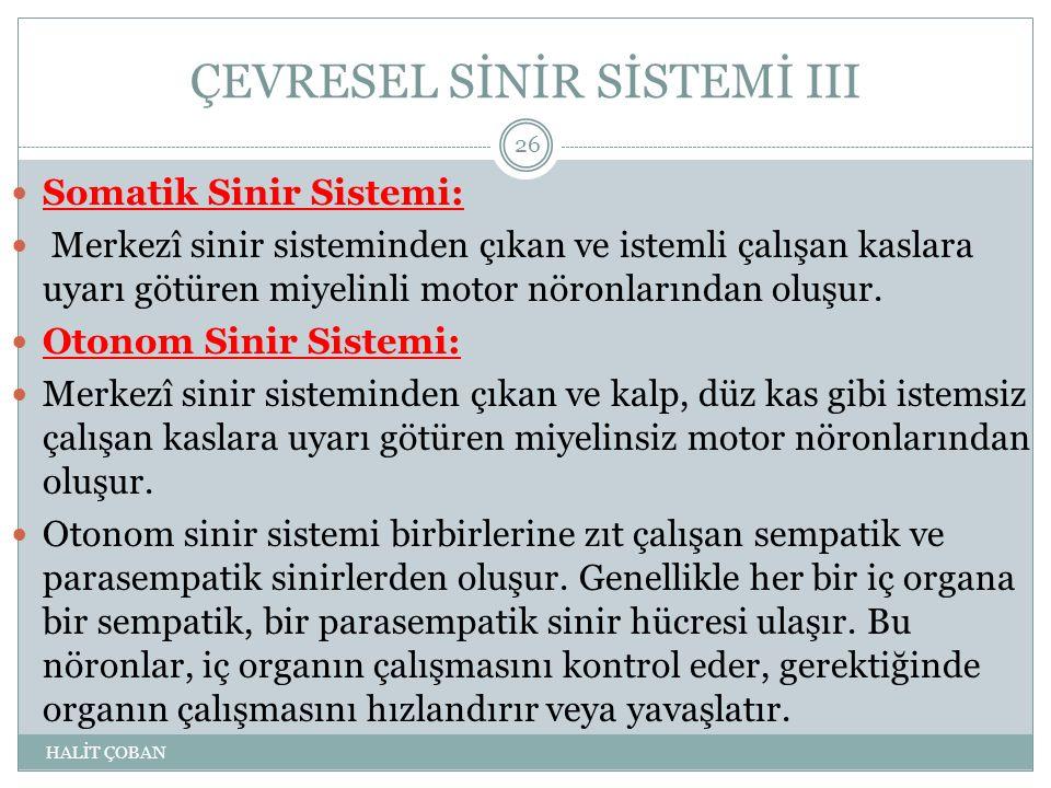 ÇEVRESEL SİNİR SİSTEMİ III