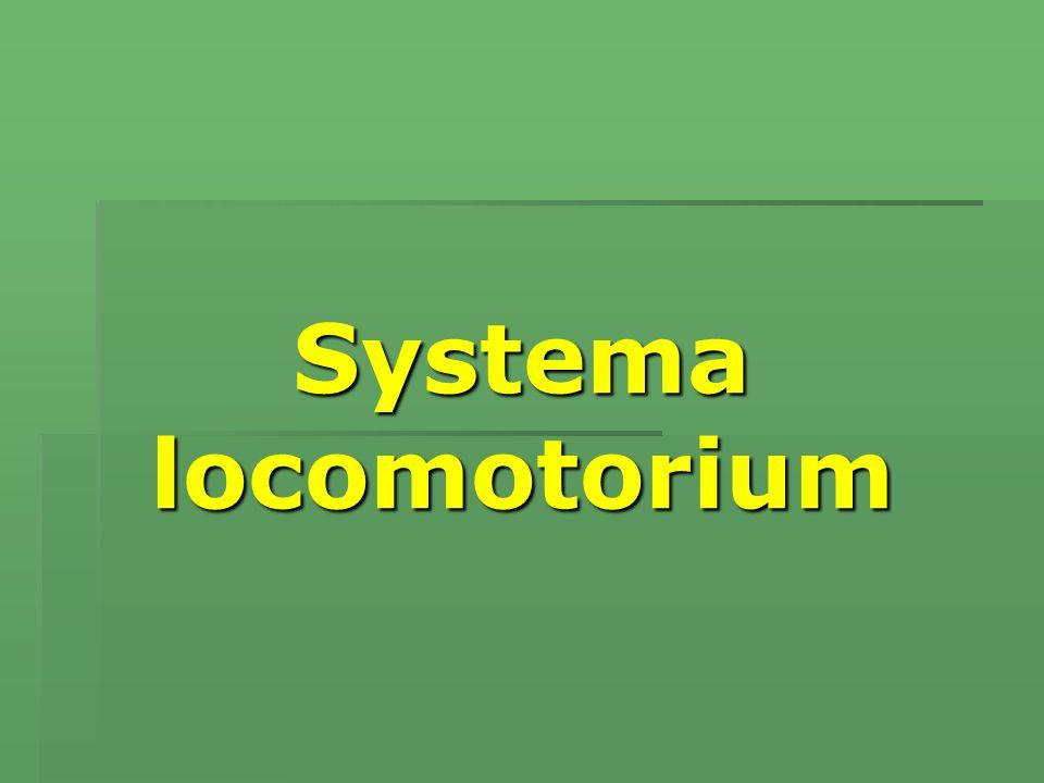 Systema locomotorium