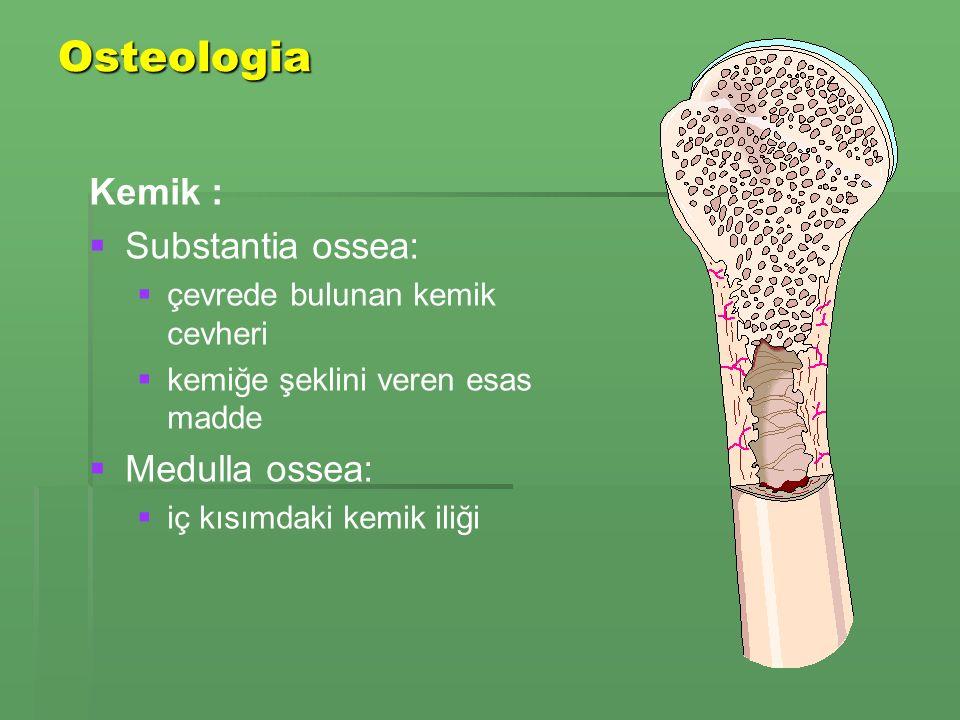 Osteologia Kemik : Substantia ossea: Medulla ossea: