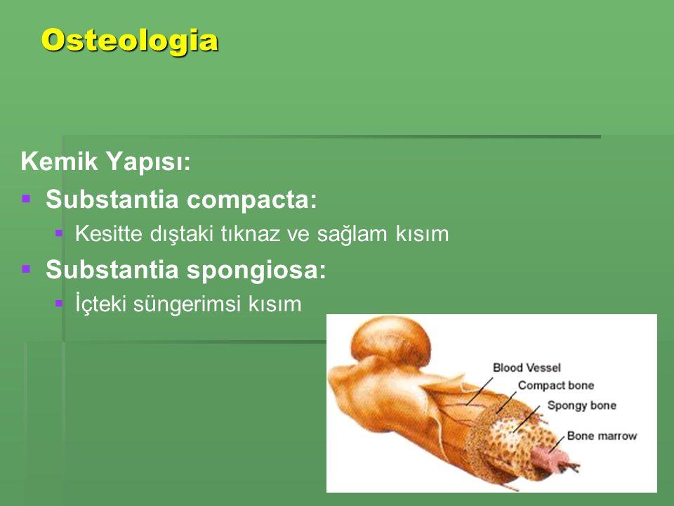 Osteologia Kemik Yapısı: Substantia compacta: Substantia spongiosa: