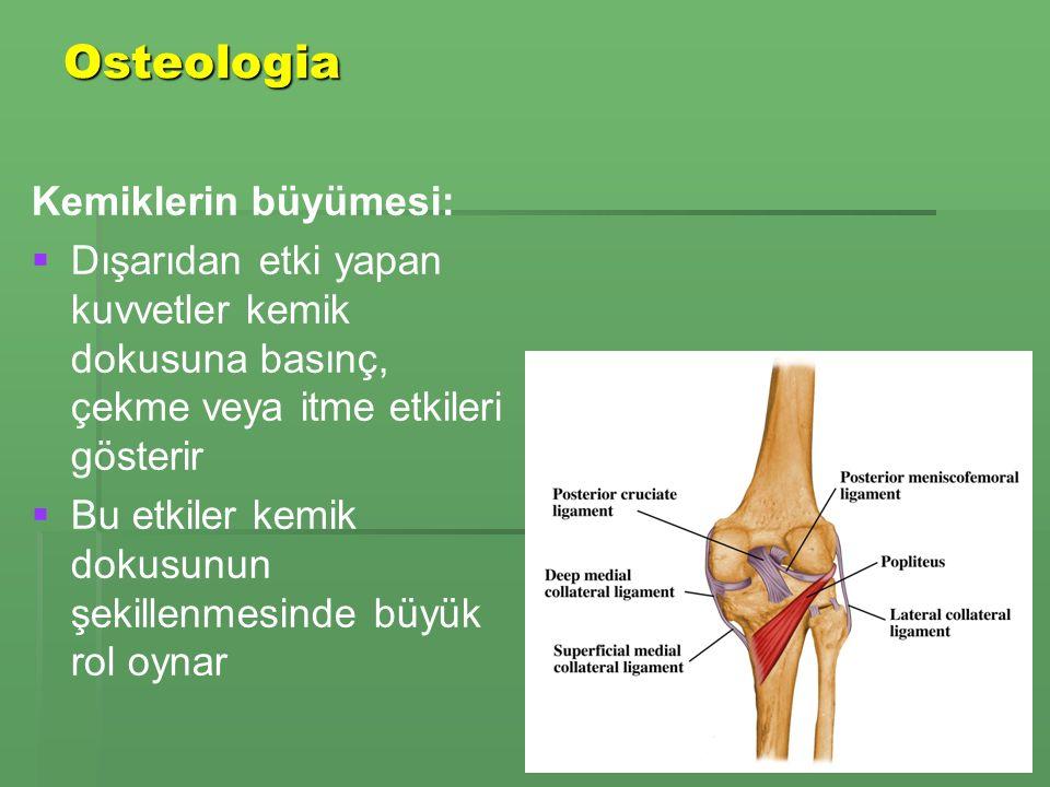 Osteologia Kemiklerin büyümesi: