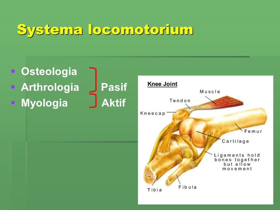 Systema locomotorium Osteologia Arthrologia Pasif Myologia Aktif