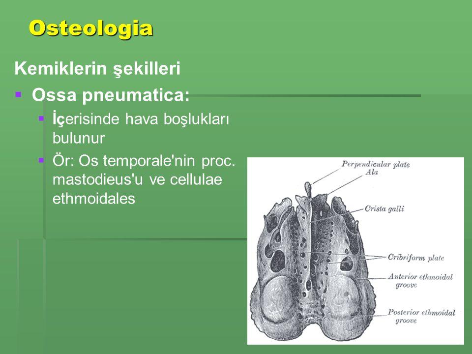 Osteologia Kemiklerin şekilleri Ossa pneumatica: