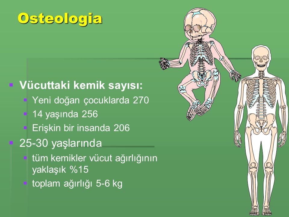 Osteologia Vücuttaki kemik sayısı: 25-30 yaşlarında