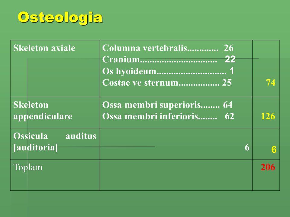 Osteologia Skeleton axiale Columna vertebralis............. 26