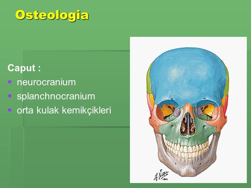Osteologia Caput : neurocranium splanchnocranium