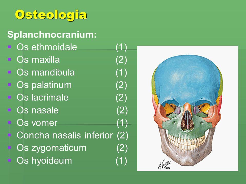 Osteologia Splanchnocranium: Os ethmoidale (1) Os maxilla (2)