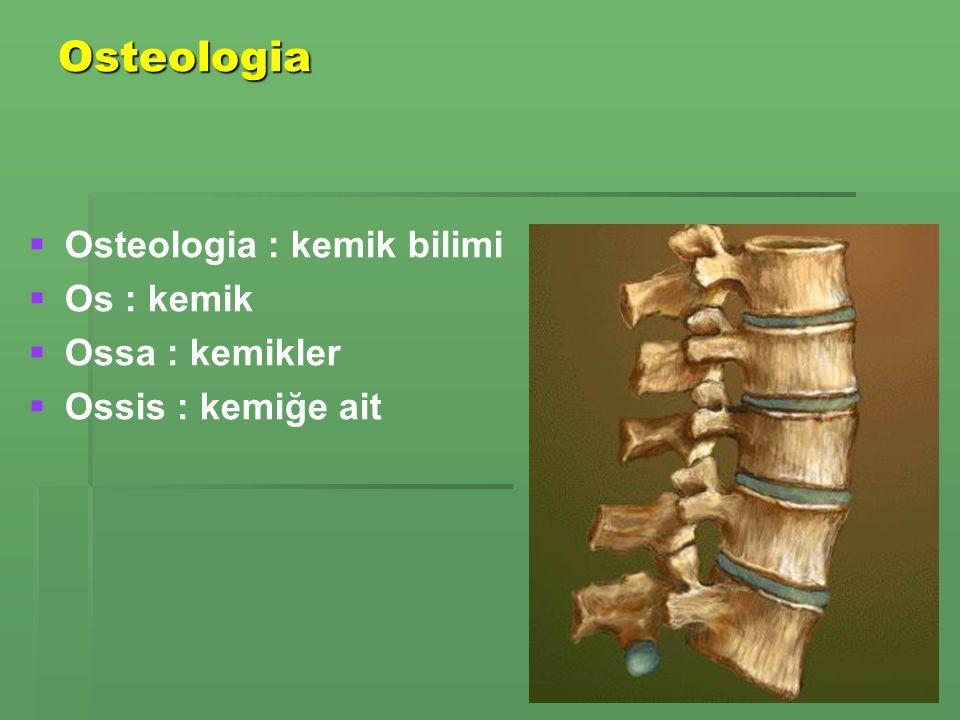 Osteologia Osteologia : kemik bilimi Os : kemik Ossa : kemikler