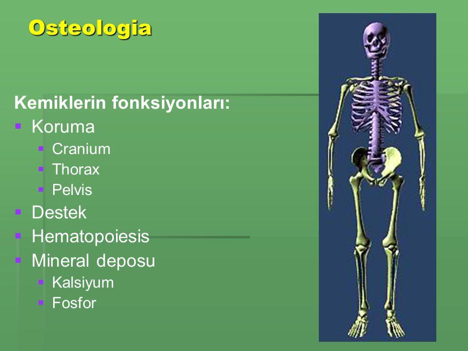 Osteologia Kemiklerin fonksiyonları: Koruma Destek Hematopoiesis