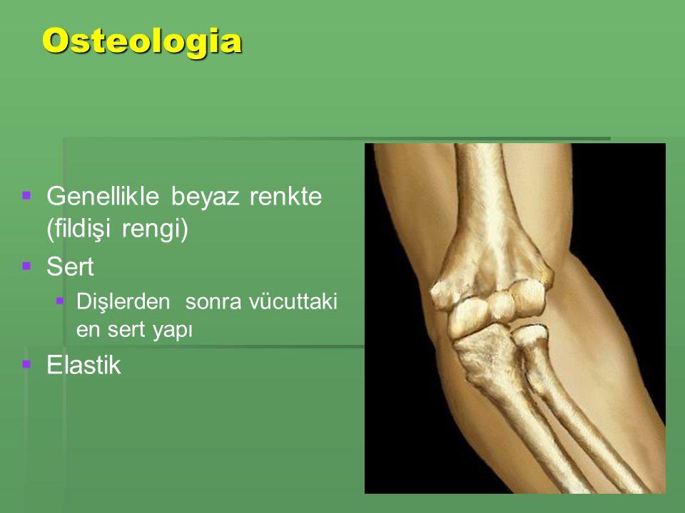Osteologia Genellikle beyaz renkte (fildişi rengi) Sert Elastik